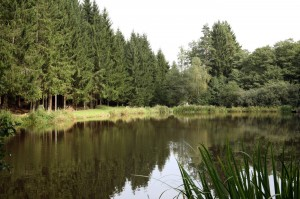 Teich_bei_Wildhaeuser_small